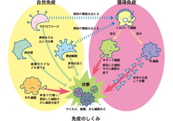 免疫力アップの秘訣